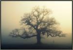 brain fog chronic fatigue syndrome myalgic encephalomyelitis